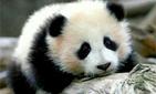 Отвлекись и улыбнись: видео с детенышами животных