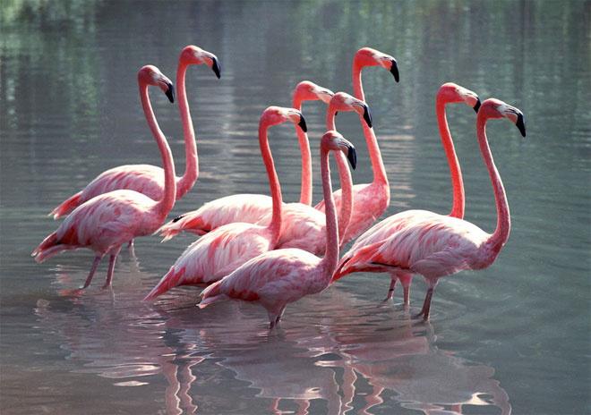 Красный фламинго, московский зоопарк