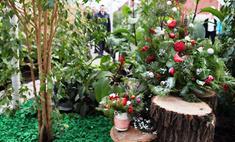 В Красноярске появилась первая публичная оранжерея