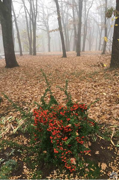 В парках Аранджеловаца