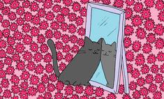 Будь мужиком! Реши каверзную загадку с котом