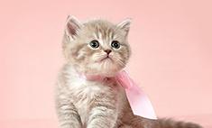 Как выбрать котенка: 5 секретов барнаульского заводчика