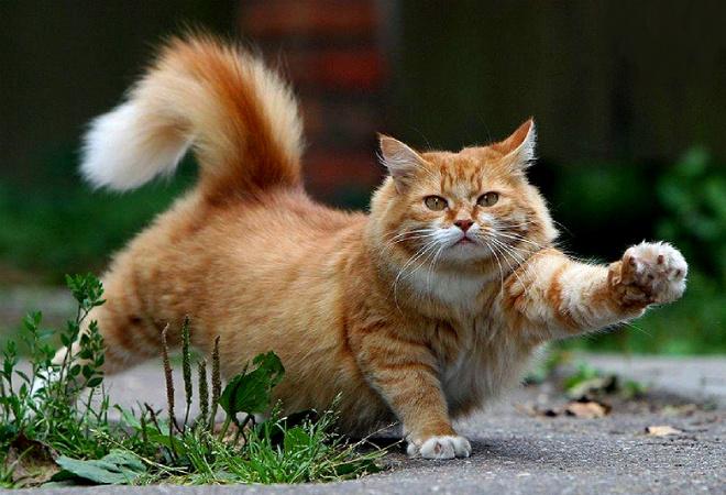 День кота в Петербурге