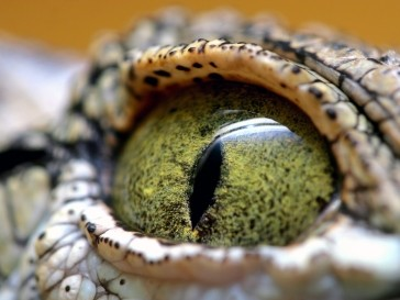 Крокодил Гарри