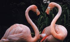 Мир в розовом цвете: 11 необычных явлений природы