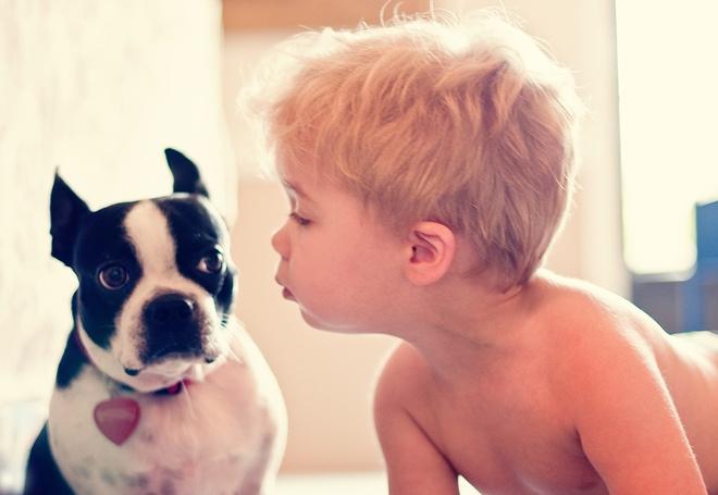 Собаки для квартиры с детьми