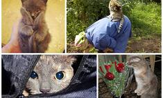 Самые озорные коты мая. Выбери лучшего!