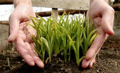Лайфхак: как сэкономить на покупке семян
