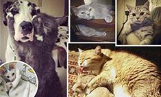 Мартовские котики Ульяновска: голосуй за самого влюбленного!