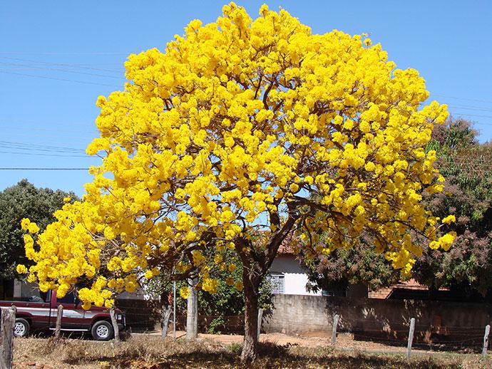самые красивые деревья мира фото