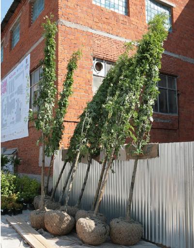 На субботниках можно высадить сразу несколько деревьев.