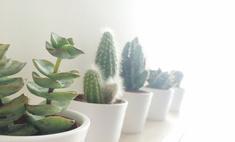 Самостоятельное спасение комнатных растений: как вывести мошек с цветка?