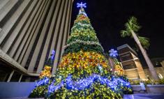 Зима в городе: 15 самых красивых елок Европы и США