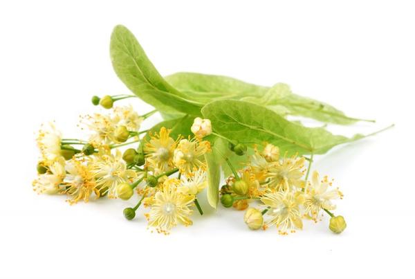 цветки липы от холестерина как принимать