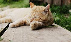 Мимими: 25 самых прикольных котов Кирова. Голосуем!