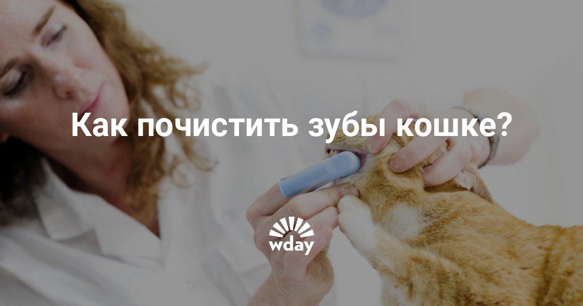 Как и чем почистить котенку зубы