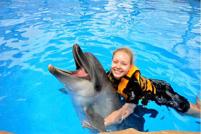 Дельфинарий СПб крестовский остров цены расписание и стоимость