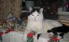 Красивые коты Красноярска