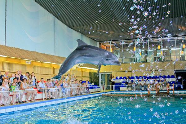дельфинарий в Тольятти, aqua show