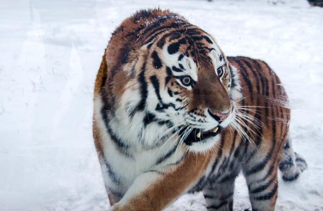 Ростовский зоопарк: фото