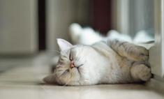 Чего хотят котики: 10 способов сделать питомца счастливым
