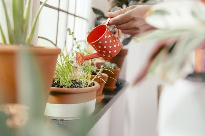 Горячая вода для цветов поможет уничтожить вредителей