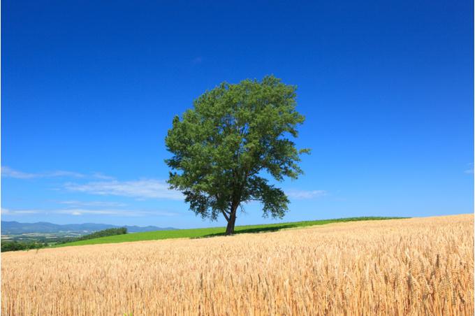 Философское дерево в Хоккайдо