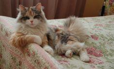 Ми-ми-ми! Самые обаятельные коты Магнитогорска