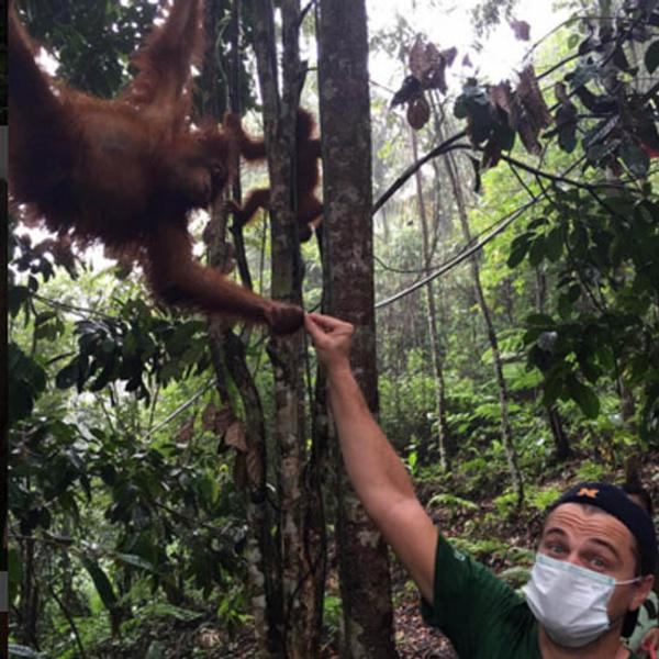 Ди Каприо хотят депортировать из Индонезии из-за любви к слонам