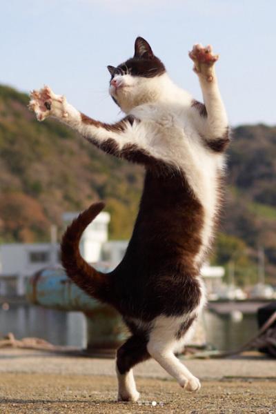 Коты которые занимаются сексом