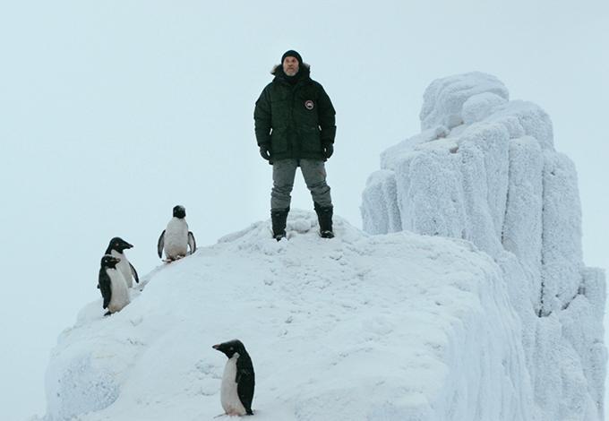 «Пингвин нашего времени» Штефана Кромера