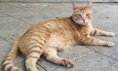 Свезло: бродячий кот получил работу в элитном отеле