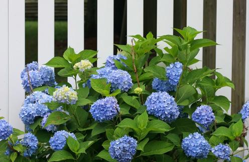 Цветок с синими цветами