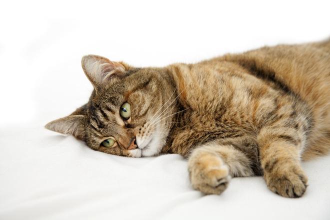 если кот заболел - тревожные признаки, которые надо знать