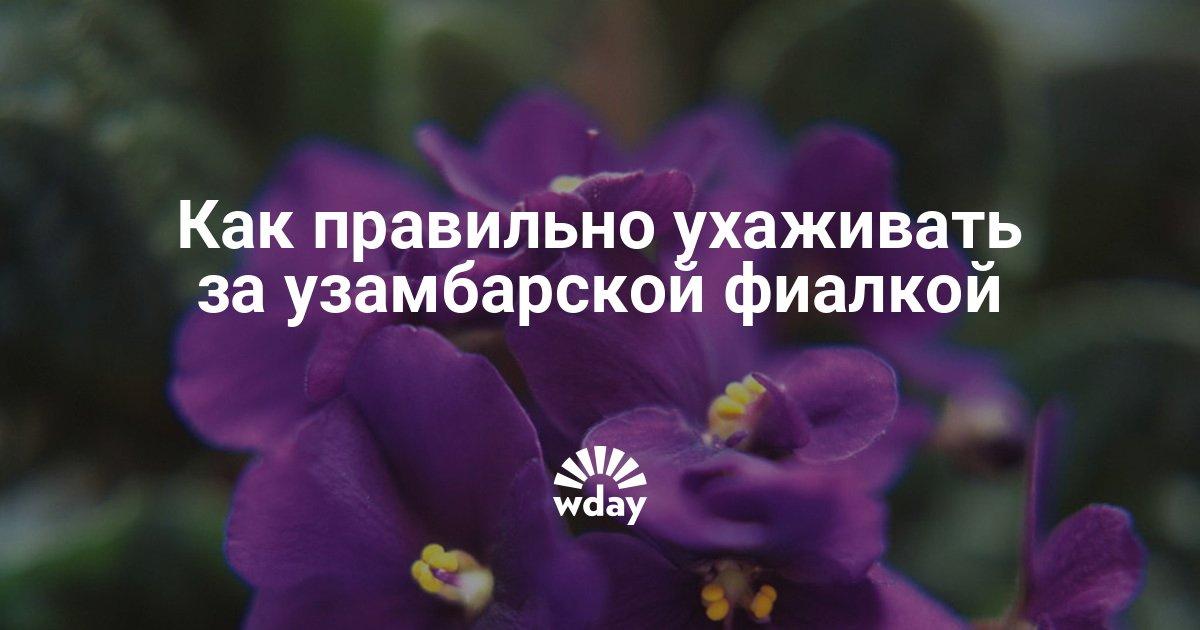 Секреты выращивания фиалок узамбарских 68