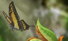 Новый тренд: цветы, поедающие комаров и мух