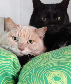 Фото №3 - Котопёс недели: кошка Клеопатра и пёс Дионис