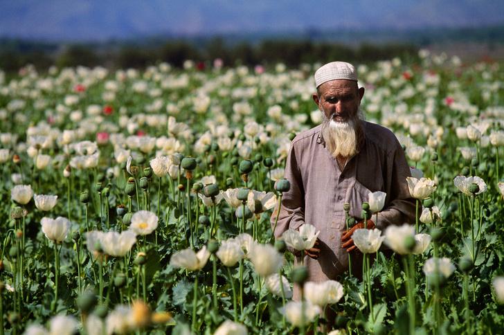 Фото №12 - 15 вещей, которые нужно знать об Афганистане, который опять пошел ко всем чертям