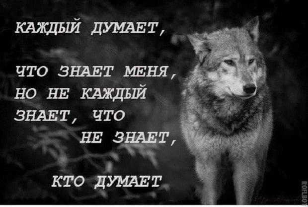 Фото №2 - Тест: отличи настоящую «пацанскую» цитату от цитаты из мема про волков