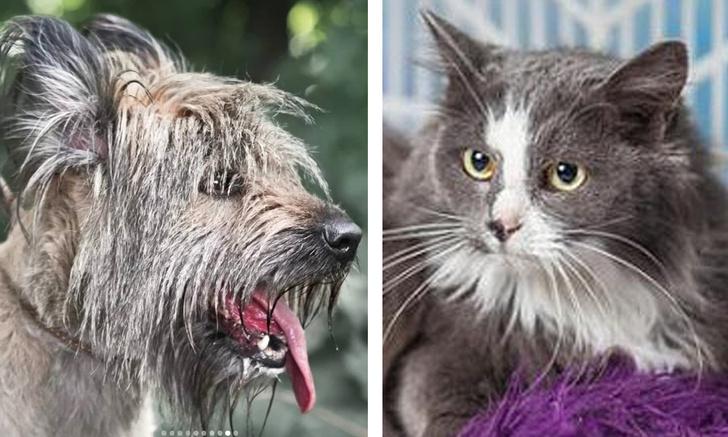 Фото №1 - Котопёс недели: кошка Анфиса и собака Туся