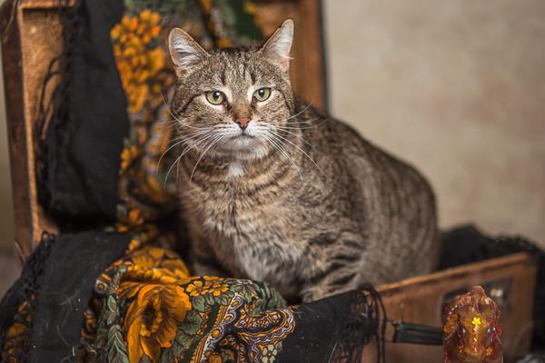 Фото №2 - Котопёс недели: пёс Ной и кот Спартак