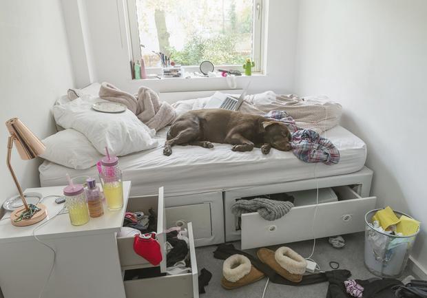 Фото №1 - Как бардак в квартире может навредить здоровью