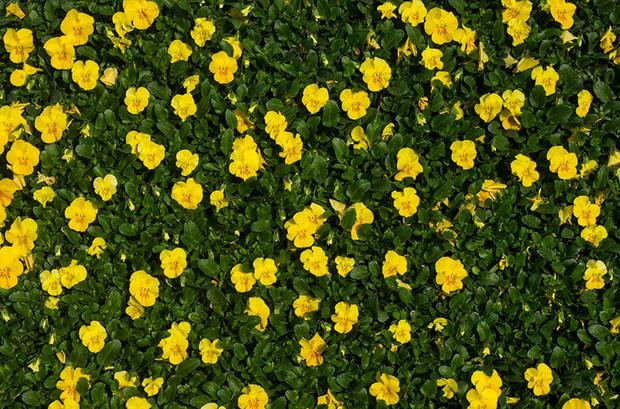 Фото №8 - Опасная ботаника: от каких растений стоит держаться подальше