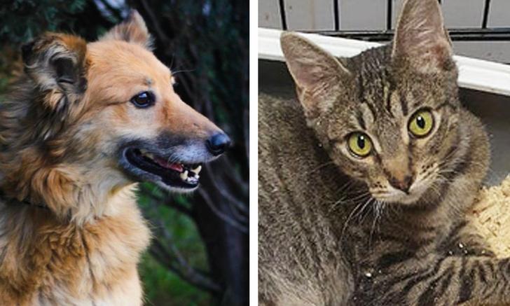 Фото №1 - Котопёс недели: собака Люси и кот Федя
