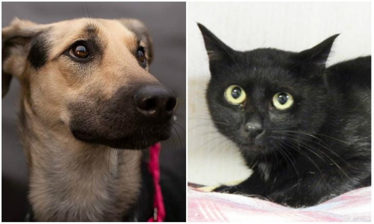 Фото №1 - Котопёс недели: собака Афина и кот Цезарь