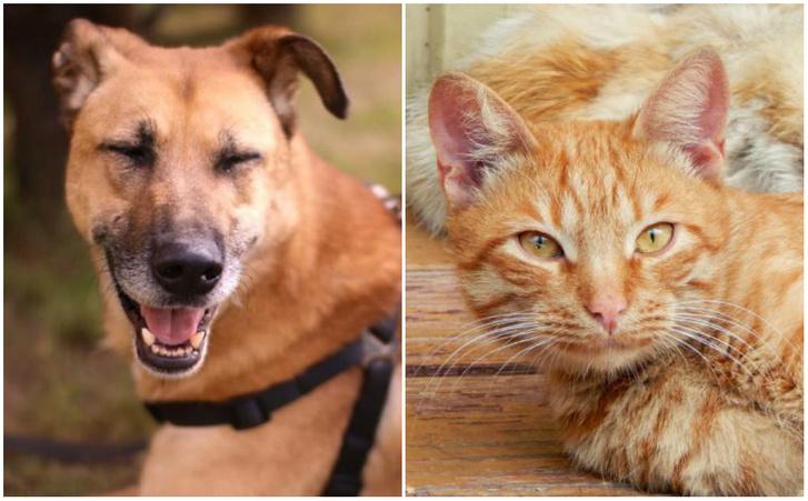 Фото №1 - Котопёс недели: пес Бонус и кот Леонсио