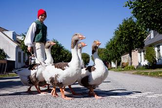 Фото №6 - Лосиный полуостров: чем вам может понравиться Швеция