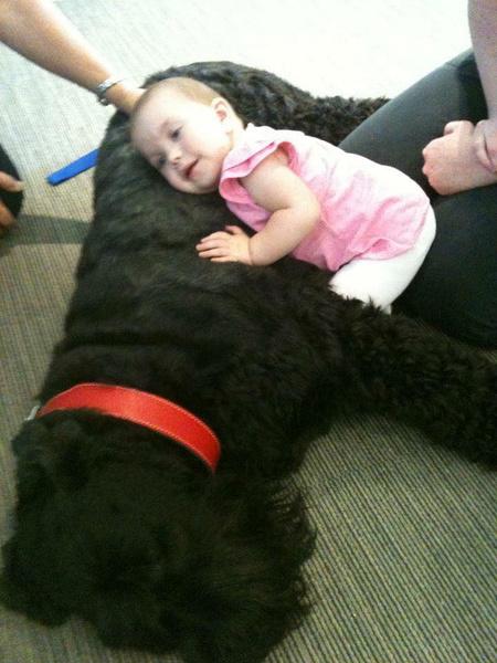 Фото №3 - Лучше, чем врач: пес-доктор помогает тяжелобольным малышам