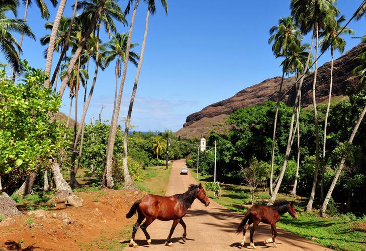 Фото №1 - Ученые выяснили, как была заселена Полинезия