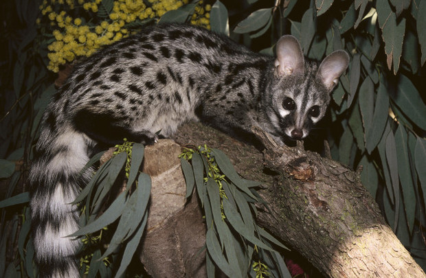 Фото №4 - 5 местами неприличных загадок из мира животных